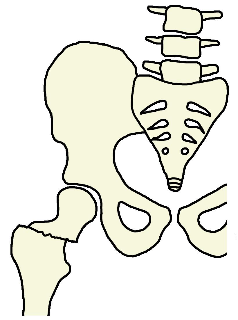 大腿骨近位部骨折