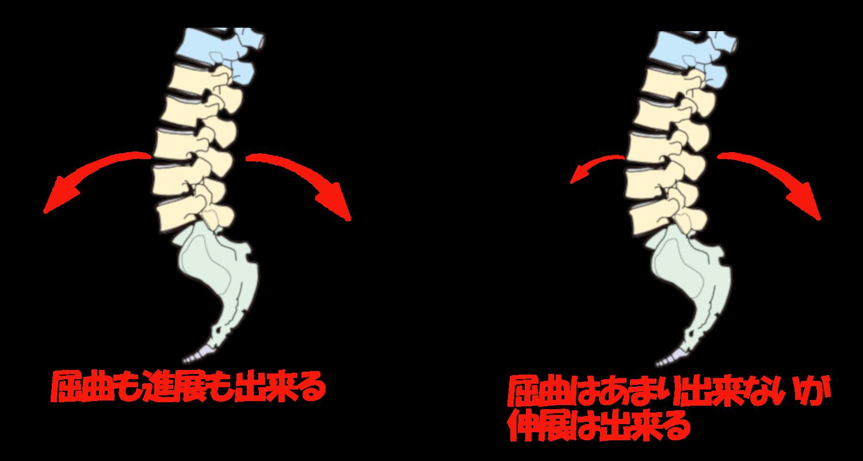 腰椎伸展と屈曲